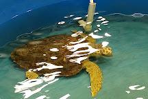 Karen Beasley Sea Turtle Rescue and Rehabilitation Center, Surf City, United States