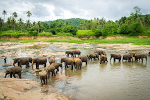 Pearl Of Sri Lanka Travel, Kosgoda, Sri Lanka