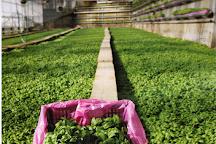 Il Laboratorio del Pesto, Levanto, Italy