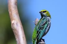 Garden House Bird Observatory and Cafe, San Gerardo De Rivas, Costa Rica