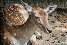 Deer Park, Kuala Lumpur, Malaysia