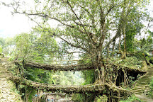 Double Decker Living Root Bridge, Sohra, India