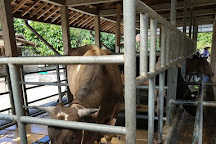 Kuntum Farmfield, Bogor, Indonesia