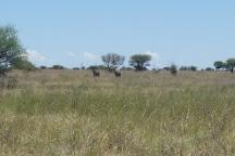 Mafikeng Game Reserve, Mafikeng, South Africa