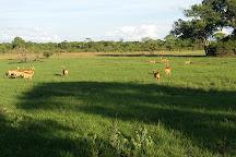 Kafue National Park, Kafue National Park, Zambia