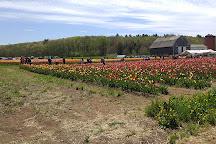 Wicked Tulips Flower Farm, Johnston, United States