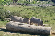Reserve Africaine de Sigean, Sigean, France