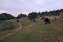 Waseley Hills Country Park, Birmingham, United Kingdom