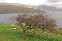 Killary Sheep Farm, Leenane, Ireland
