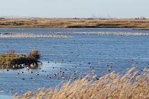 Oare Marshes Nature Reserve, Oare, United Kingdom