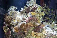 Florida Oceanographic Coastal Center, Stuart, United States