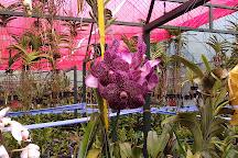 Caribbean Botanical Garden, Guacimo, Costa Rica
