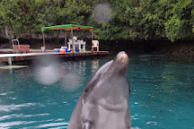 Dolphins Pacific, Koror, Palau