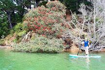 Whangarei Harbour Marine Reserve, Whangarei, New Zealand