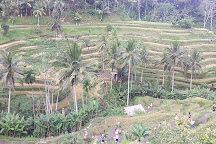 Tegalalang Rice Terrace, Ubud, Indonesia