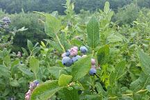 Stateline Blueberries, Michigan City, United States