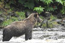 Pack Creek, Juneau, United States
