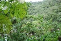 Cocos Island National Park, Province of Puntarenas, Costa Rica