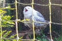 World of Owls, Randalstown, United Kingdom