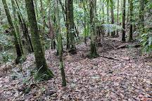Whian Whian State Conservation Area, Whian Whian, Australia
