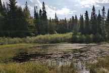 Whiskey Rapids Trail, Algonquin Provincial Park, Canada