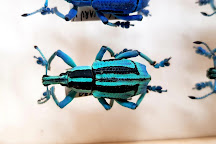 Daintree Entomological museum, Diwan, Australia