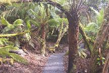 Mole Creek Caves, Mole Creek, Australia