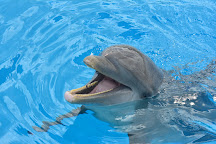 Dolphin Discovery Punta Cana, Punta Cana, Dominican Republic