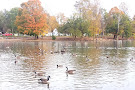 Webster Pond