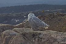 Pemetic Mountain, Acadia National Park, United States