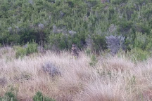 Scenic Estate Conservation Reserve, Phillip Island, Australia
