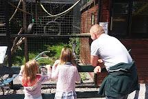 C & J's Animal Park, Portadown, United Kingdom