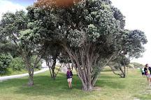 Tawharanui Regional Park, Warkworth, New Zealand