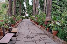 Forest Nursery, Saputara, India