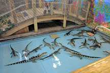 The Alligator Attraction, Madeira Beach, United States