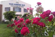 House of Van Cats, Van, Turkey
