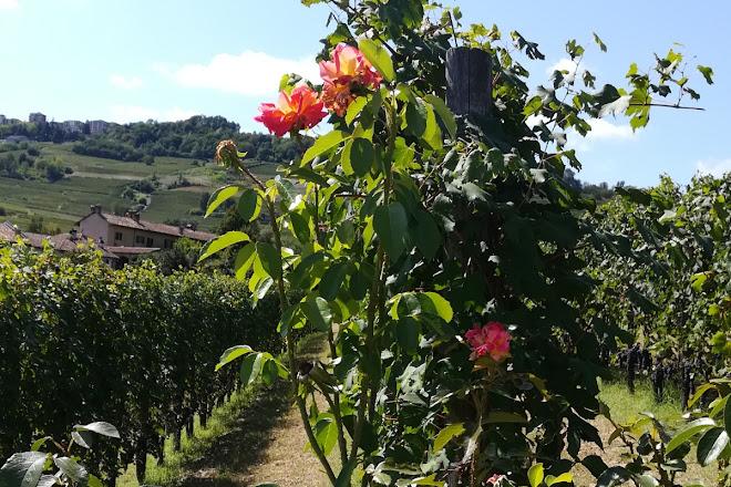 Azienda Agricola Eraldo Viberti, La Morra, Italy