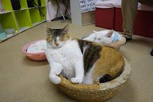 Cat cafe Asakusa cat Gardens, Taito, Japan