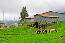 Desa Dairy Farm, Kundasang, Malaysia