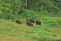 Chimmini Wildlife Sanctuary, Thrissur, India