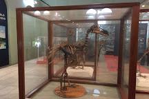 Natural History Museum, Port Louis, Mauritius