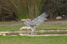 Raptor Domain, Seal Bay, Australia