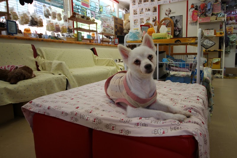 Hogoken Cafe Salon 保護犬 保護猫カフェ天神橋店 大阪府大阪市北