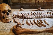 Museo Geologico e Paleontologico G.G. Gemmellaro, Palermo, Italy