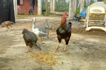 Kondakarla Bird Sanctuary, Visakhapatnam, India