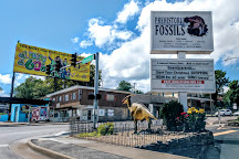 Prehistoric Fossils, Branson, United States