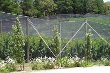 Stella Creek Cherry Orchard, Adelaide, Australia