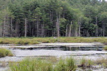 Quincy Bog Natural Area, Rumney, United States