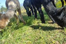 Alpaca Padocks, Montagu, South Africa