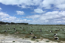 Midway Atoll, Hawaii, United States